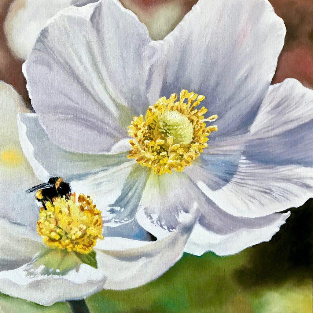 Pollinators: bumble bee on white anemones