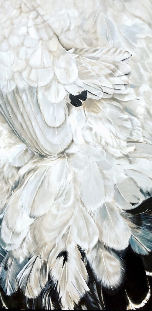 Eggs and Feathers: white and black chicken feathers seen up close