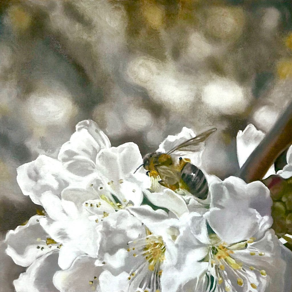 Pollinators: honey bee on pear blossoms