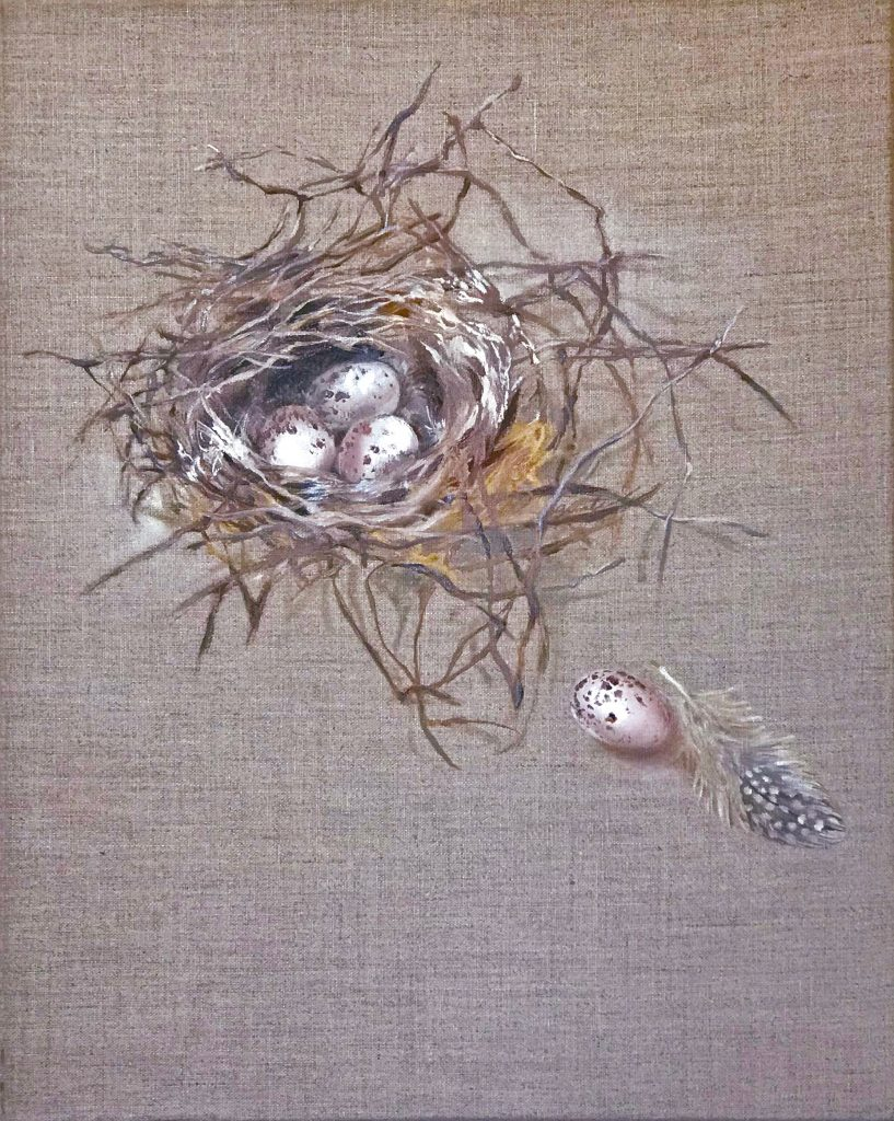 Eggs and Feathers: Fly Catcher's nest with four eggs