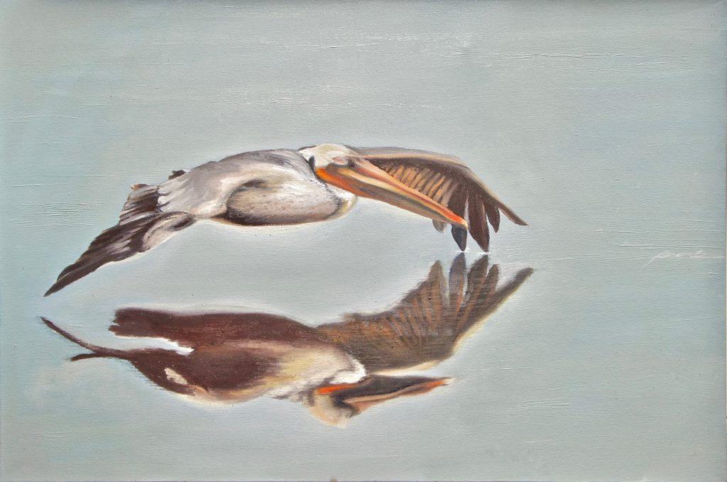 Brown pelican in flight reflected in still water
