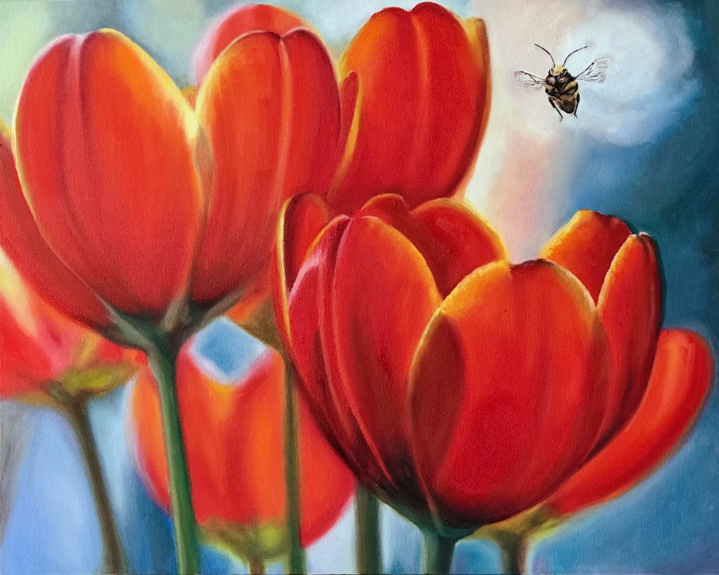 Pollinators: Red and yellow sunlit open tulips approached by a bee pollinator