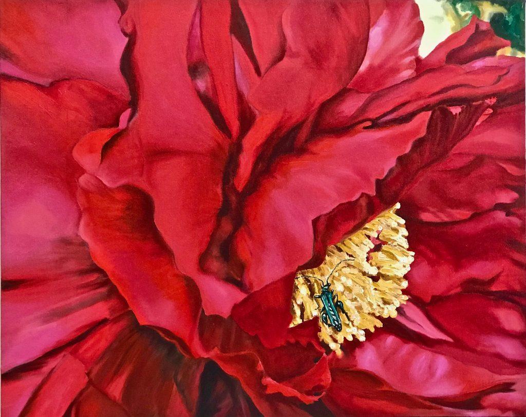 Pollinators: Red peony and thick-legged green beetle pollinator