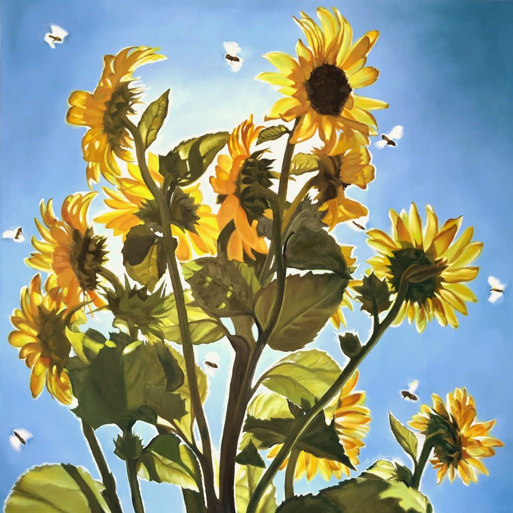 Pollinators: Backlit sunflowers in a cloud of busy bees