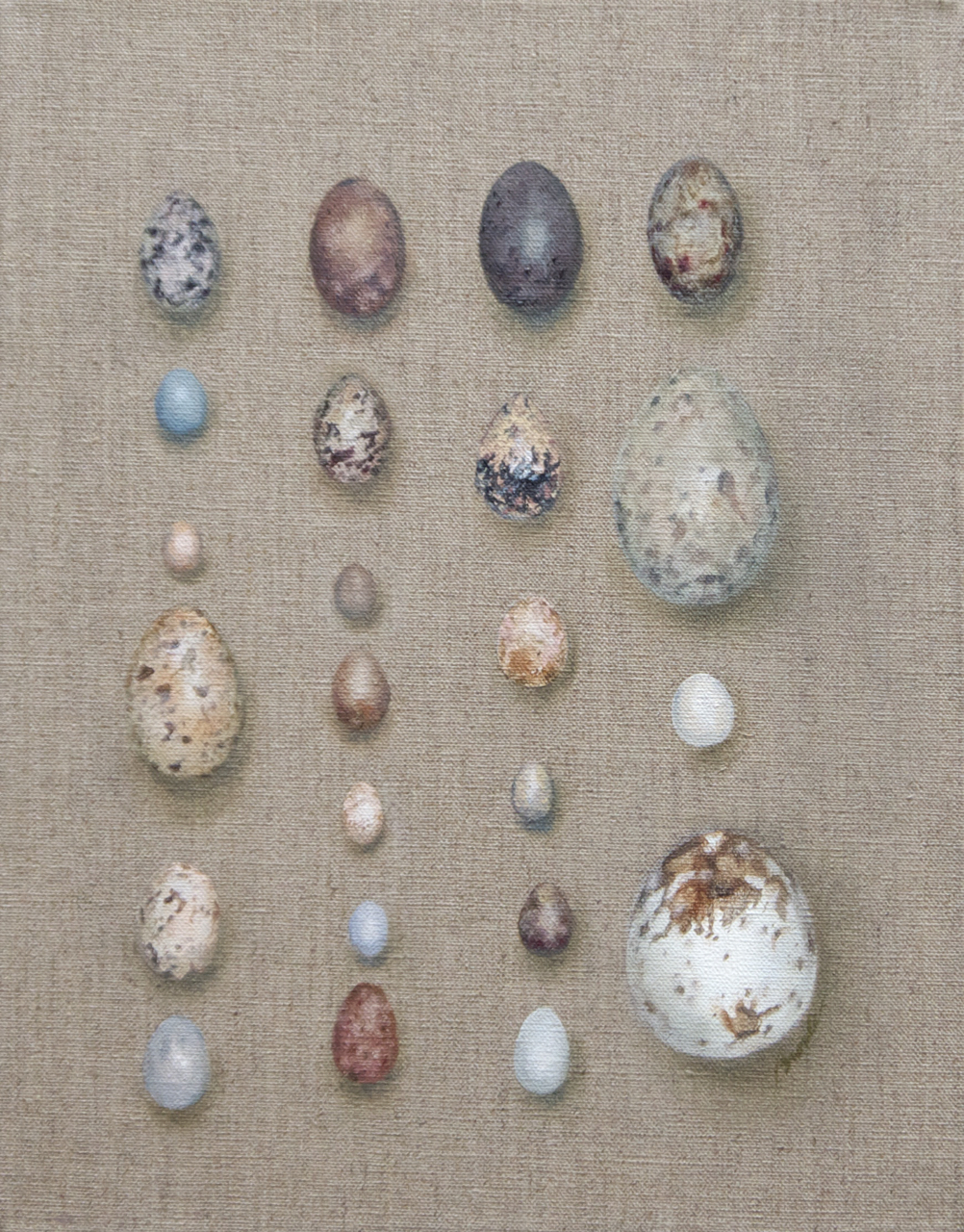Eggs and Feathers: collection of wild bird eggs