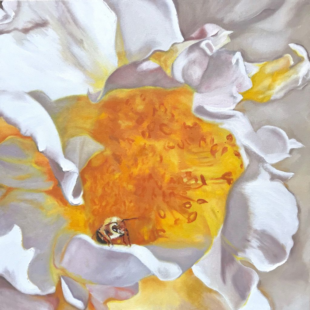 Pollinators: single open rose with honey bee
