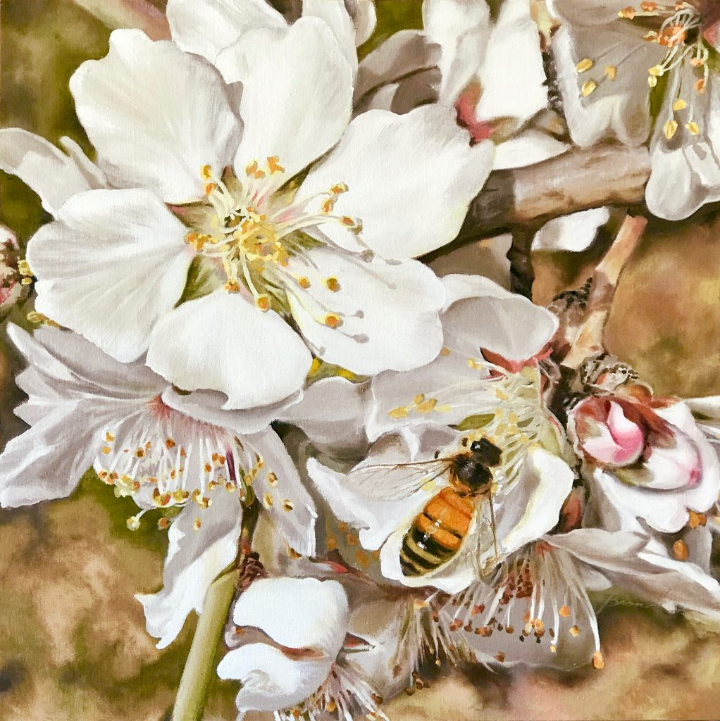 Pollinators: almond blossoms with honey bee